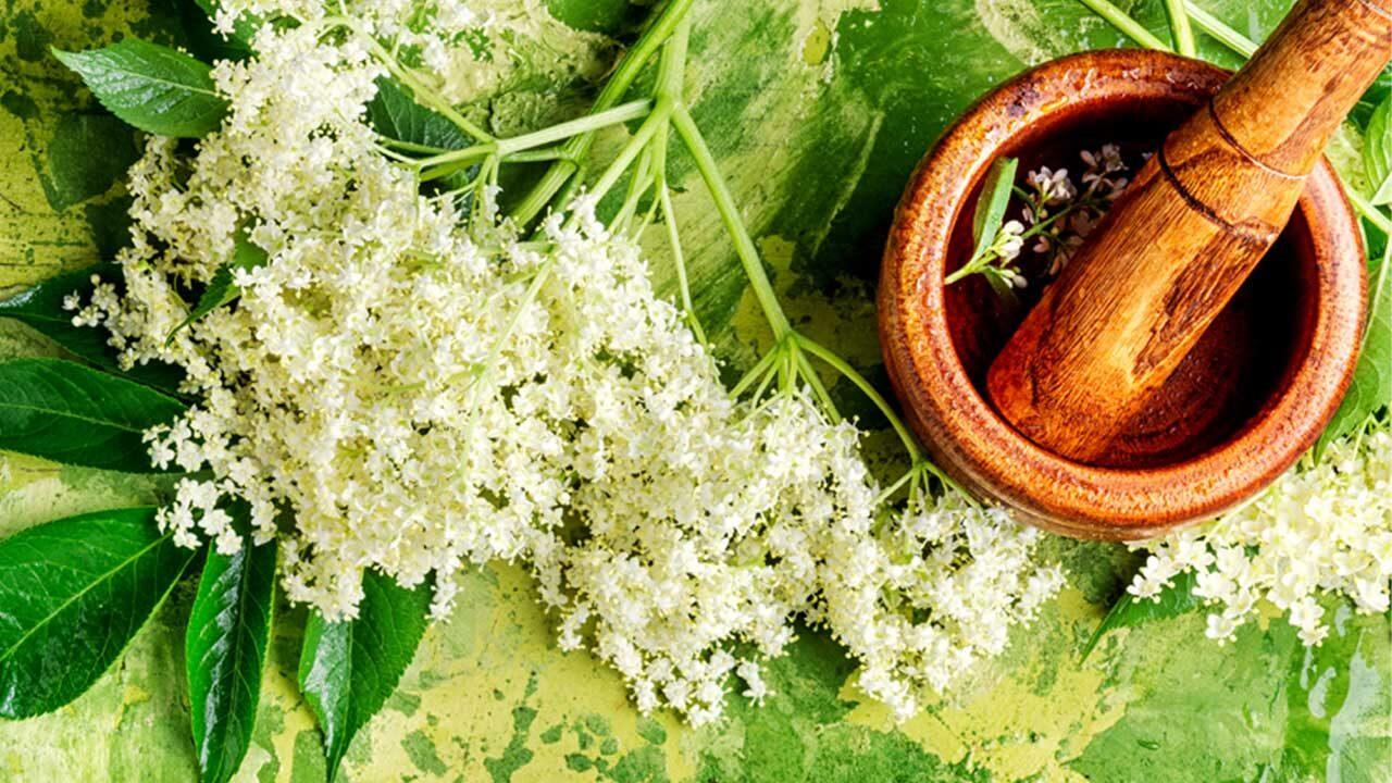 weiße Blüten auf grünem Untergrund_v002