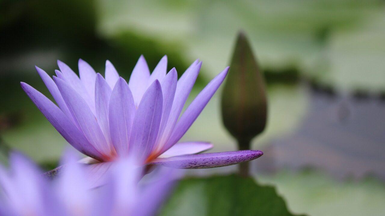 flower-5538547_1920