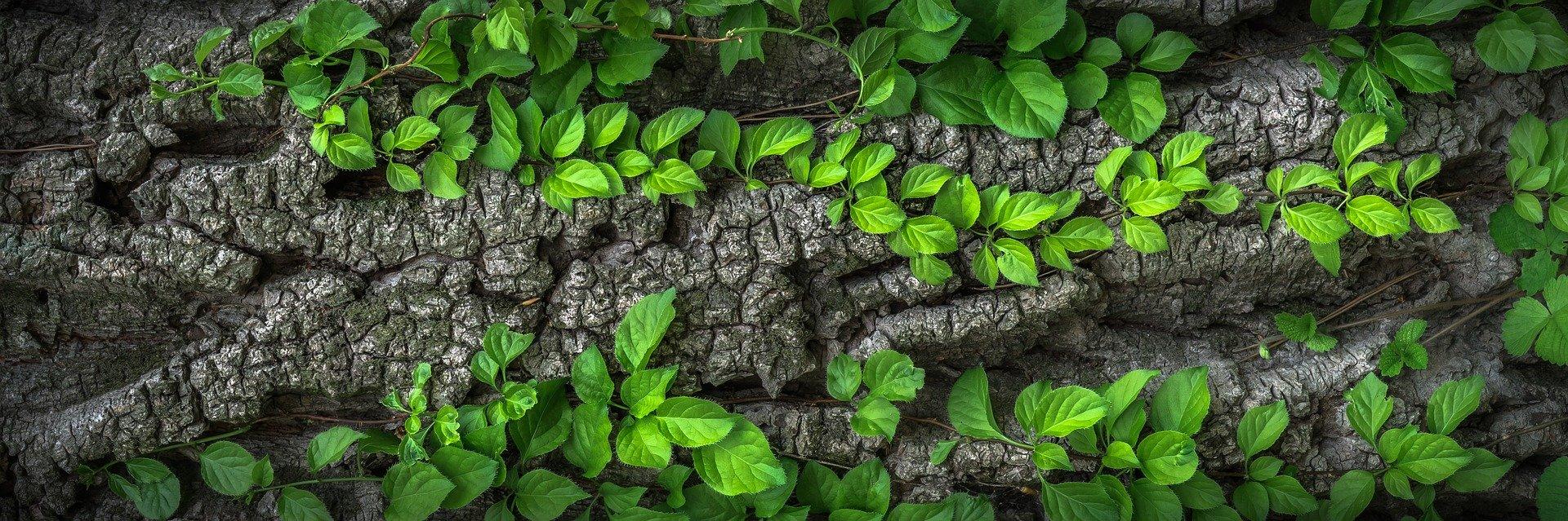 leaves-1350175_1920